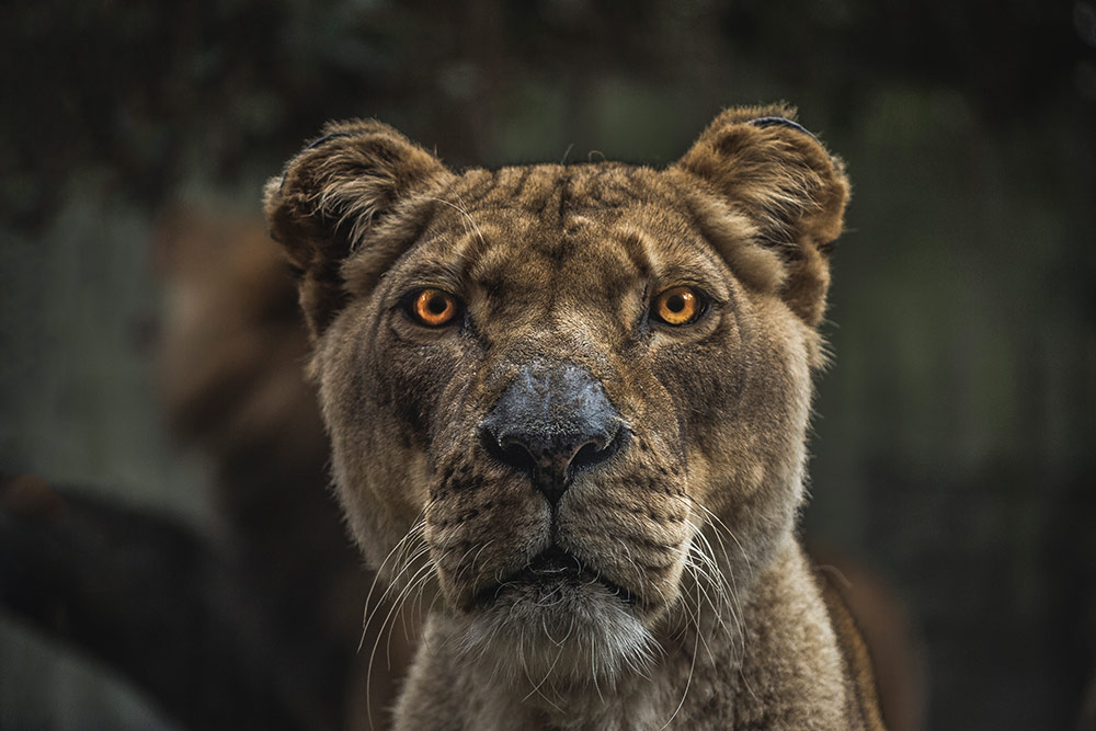 Wild Animal Portraits